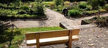 Carl von Linné-benken i Botanisk hage blir værende