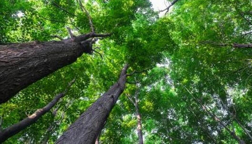 Grønnmaling. Mange mener ordet «bærekraft» er blitt ødelagt gjennom grønnvasking av næringslivets aktiviteter, skriver kronikkforfatterne.