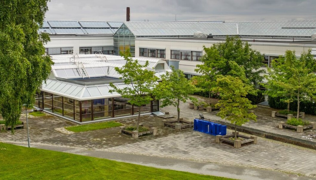 Ved NTNU, her ved campus Dragvoll, er det enkelte institutter som er på størrelse med et fakultet. Det gir behov for et ekstra ledernivå, men per i dag finnes det ikke gode nok rutiner for hvordan et slikt ledernivå skal organiseres.