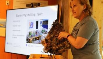 Hilde Ervik fortalte om hvordan studentene ved NTNU får jobbe med temaet Bærekraftig utvikling i havet.