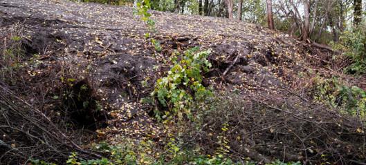 NTNU dumpet hageavfall ulovlig i Sprutenskogen